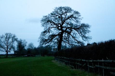 Pasture in Moreton-in-Marsh