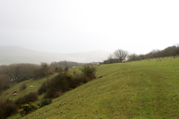 Sheep pasture on the South Downs