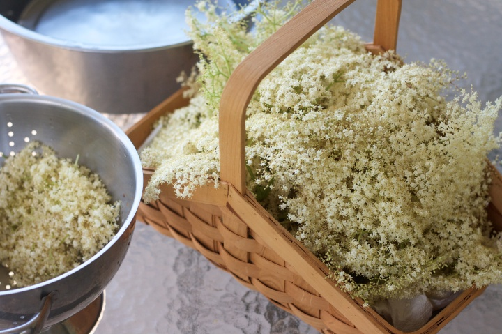 Elderflower Picking